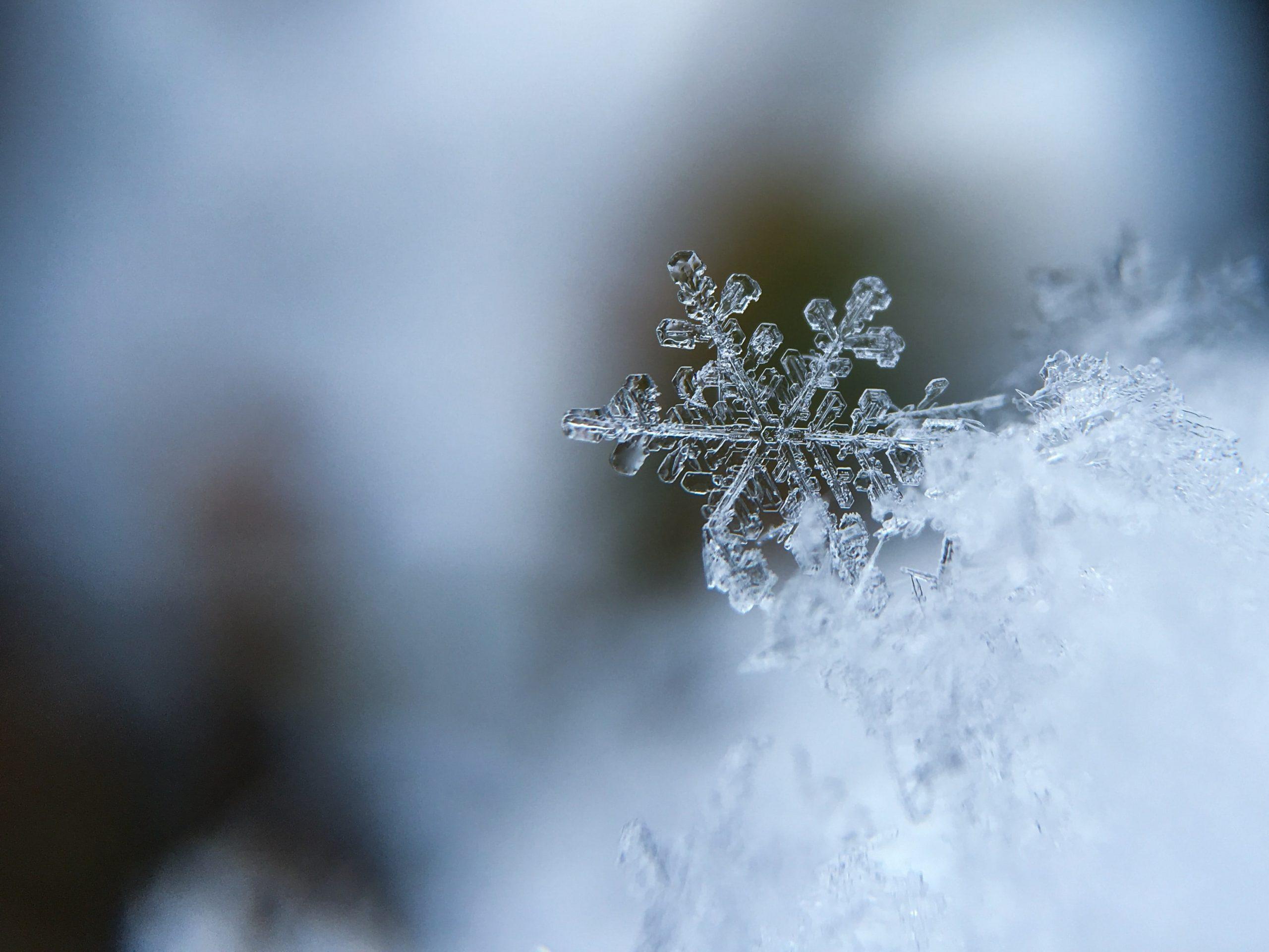 frozen snow flake