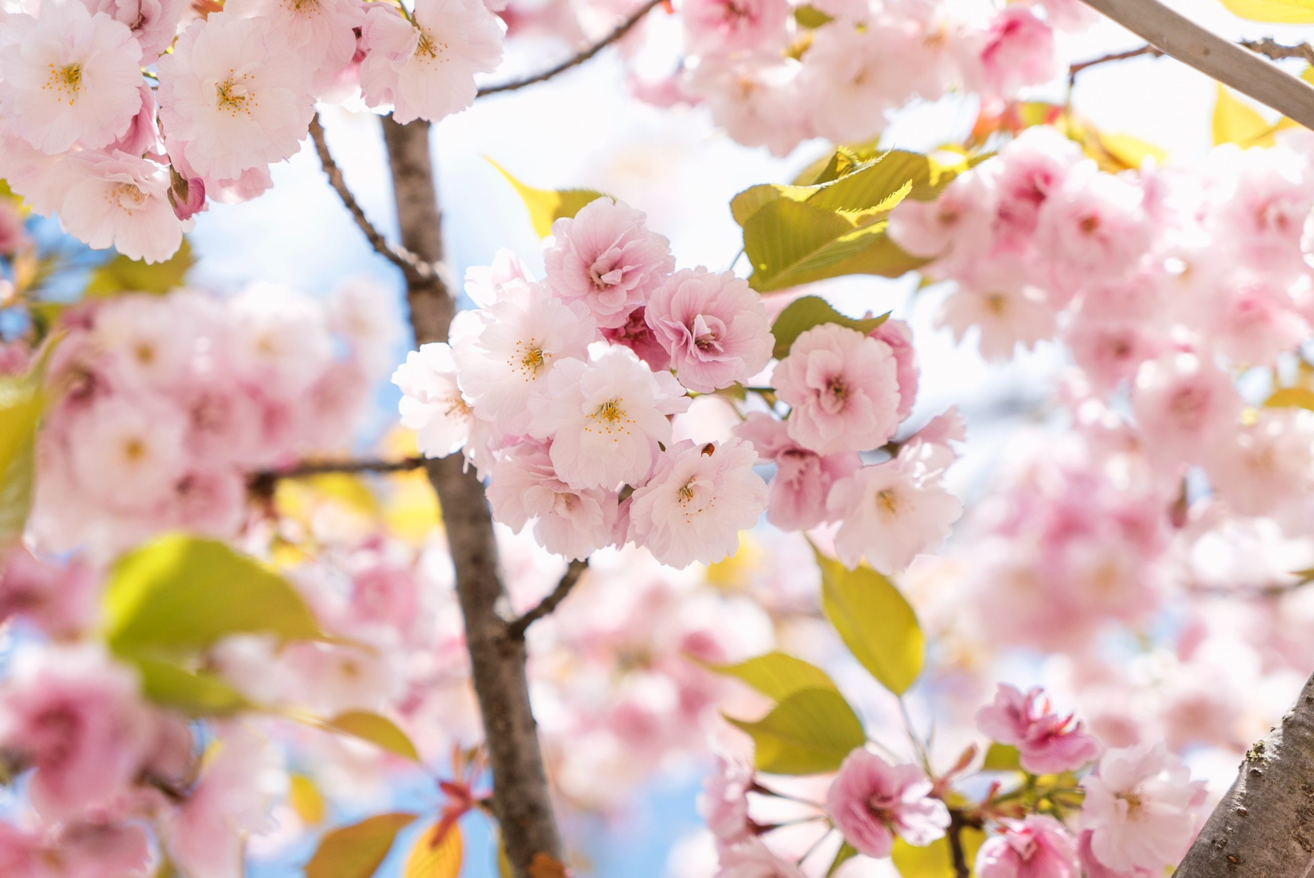 Spring blossoming flowers