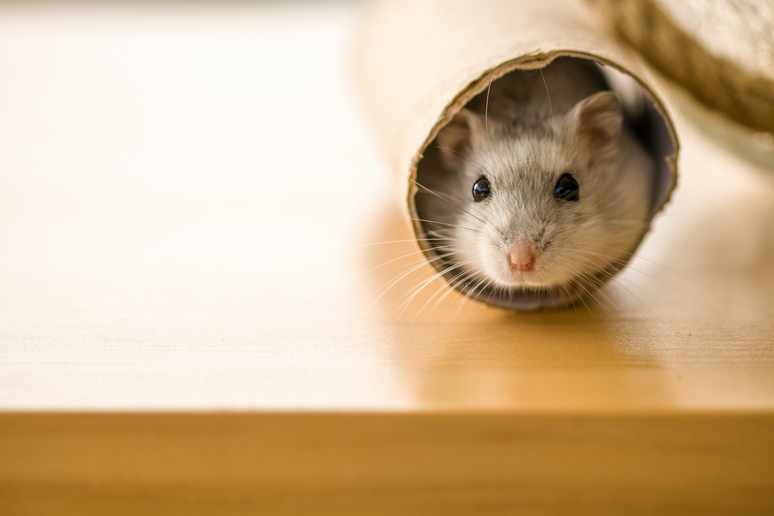 Mouse in a tube